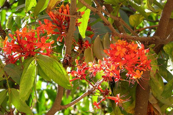 hoa vô ưu 2